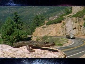 Frame 5.543391 de: ¿Qué animal rueda colina abajo sin hacerse daño?