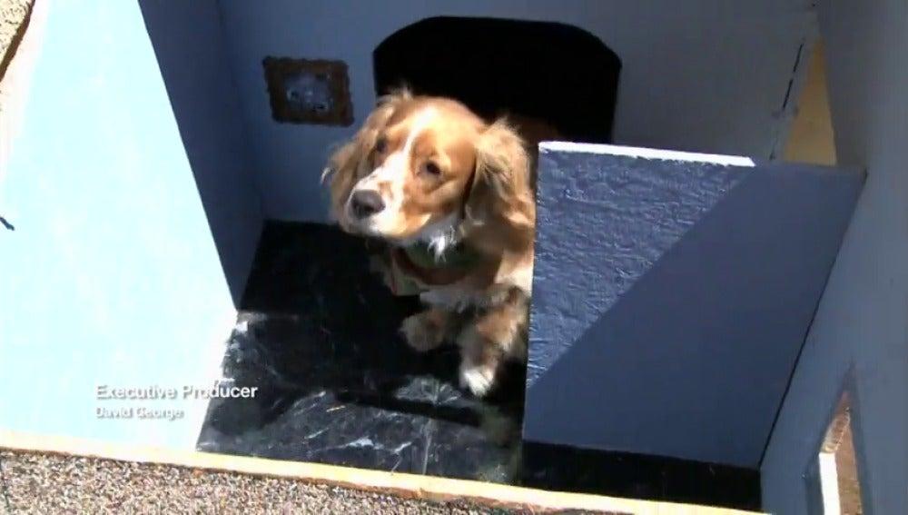Frame 37.247171 de: Rick monta una casa para el perro