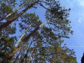 árbol en Mountain Men