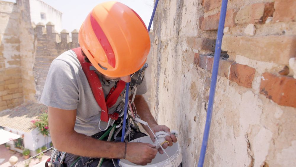 Devolver una cría de cernícalo a su nido, el objetivo improvisado de Servicios Verticales Carmona