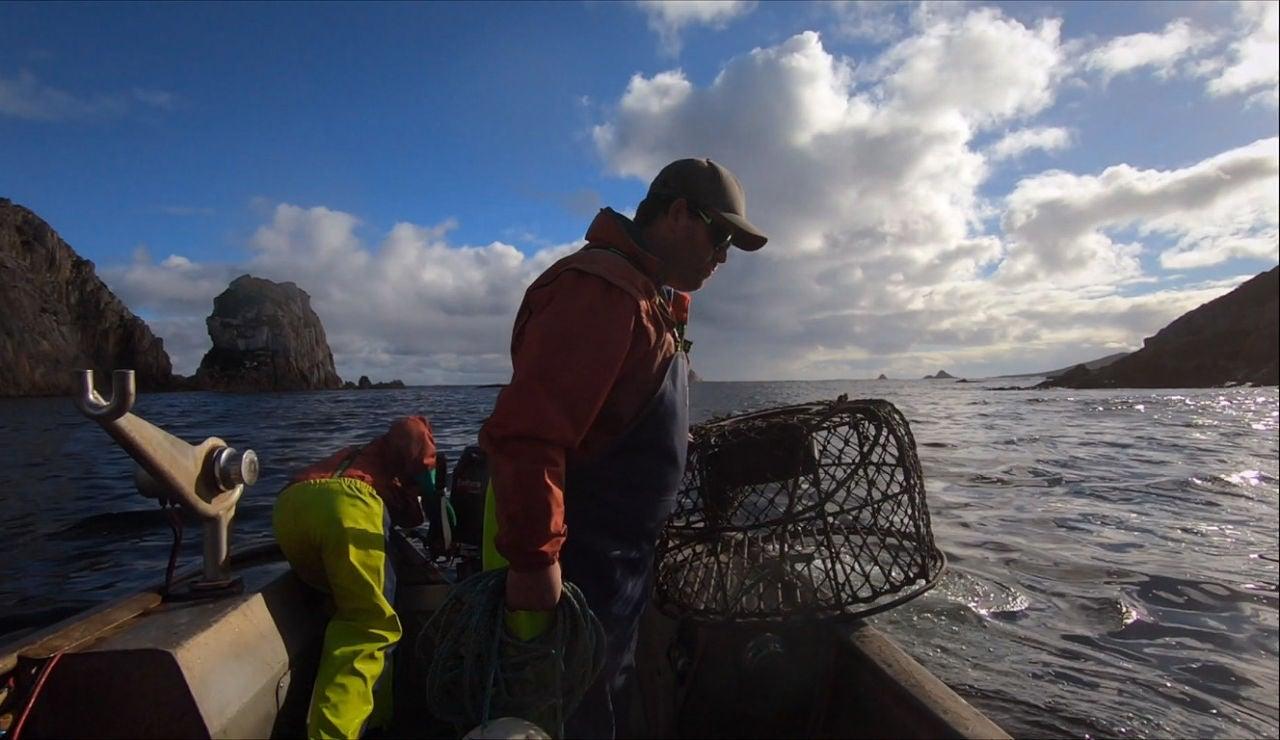 Pescar langostas en bote