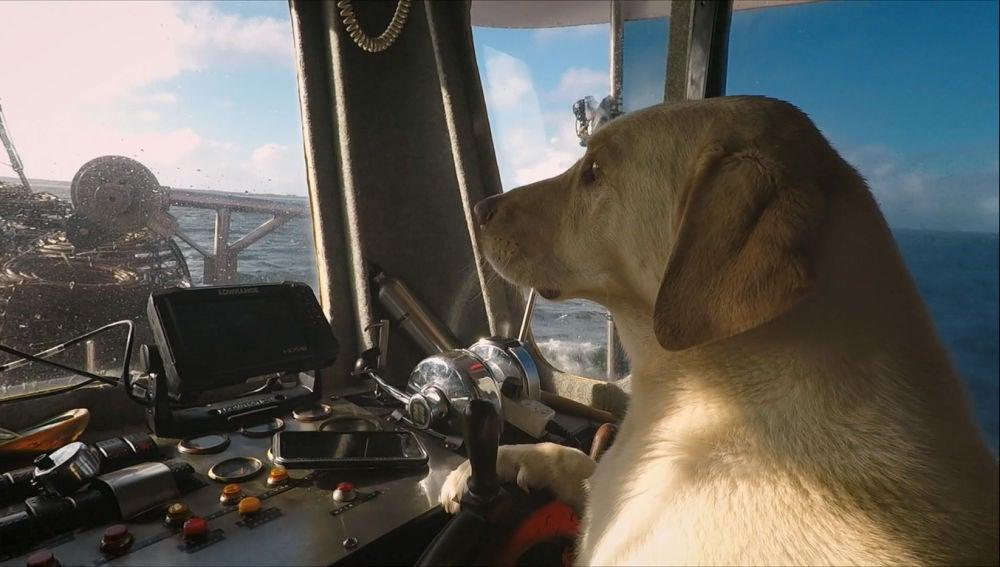 Gus el nuevo miembro de la flota