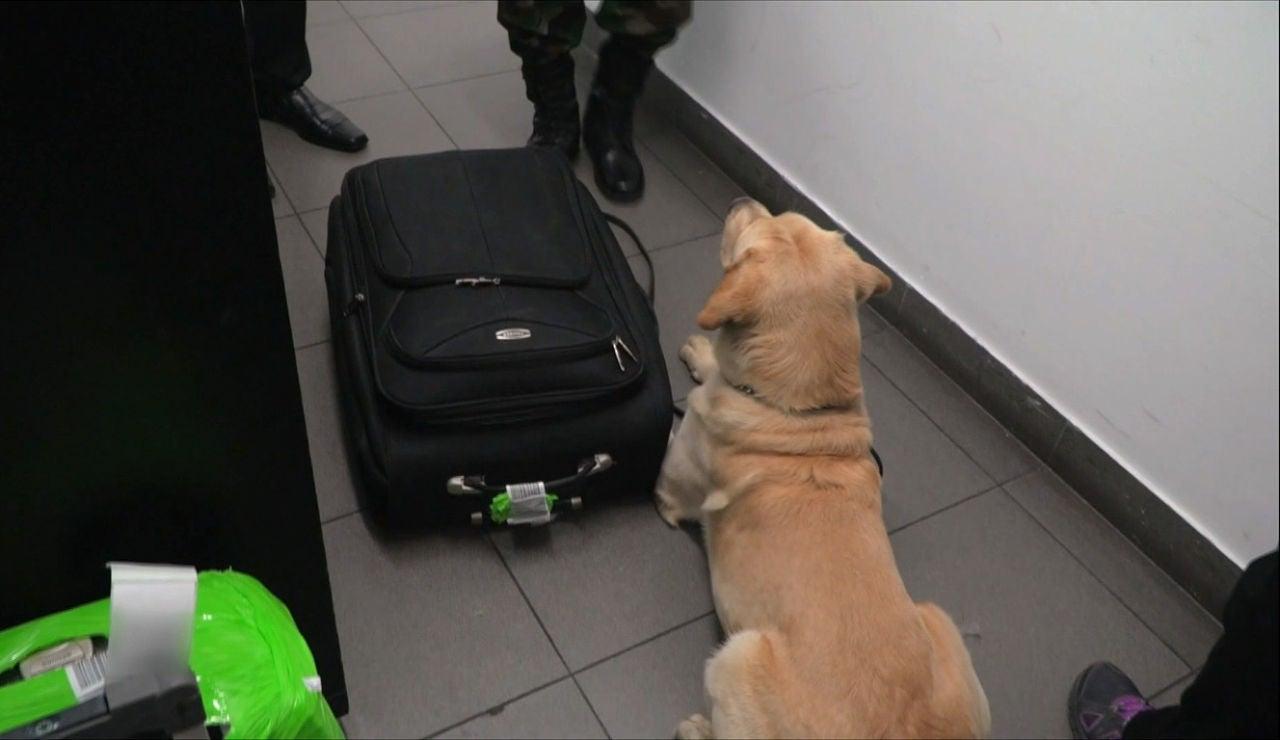 Un perro policía descubre droga en una maleta