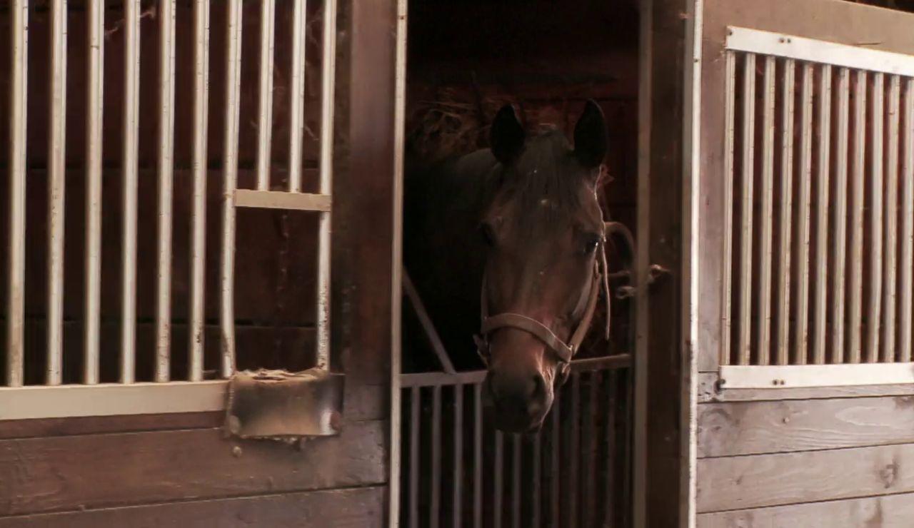 """""""Nadie quiere caballos gemelos"""" El doctor Pol nos cuenta el motivo"""