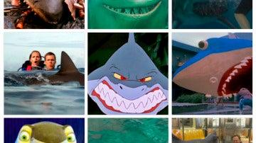 Sharkbado