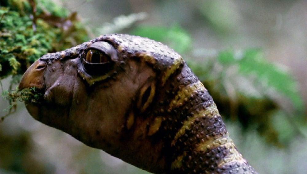 Observa a los dinosaurios en su hábitat natural en MEGA