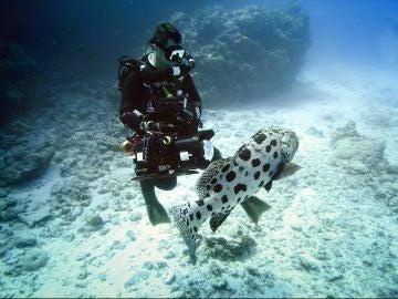 'La gran barrera de coral', estreno el sábado en MEGA