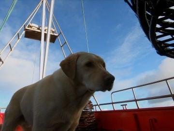 Gus, el perro de Steve