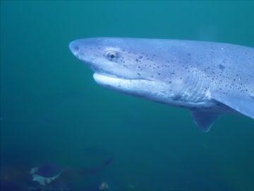 La amenaza de los tiburones