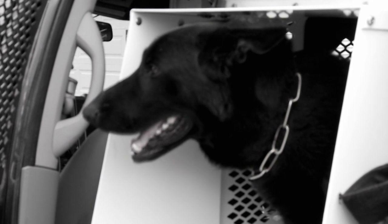 Resultados inesperados y mal final para el perro policía