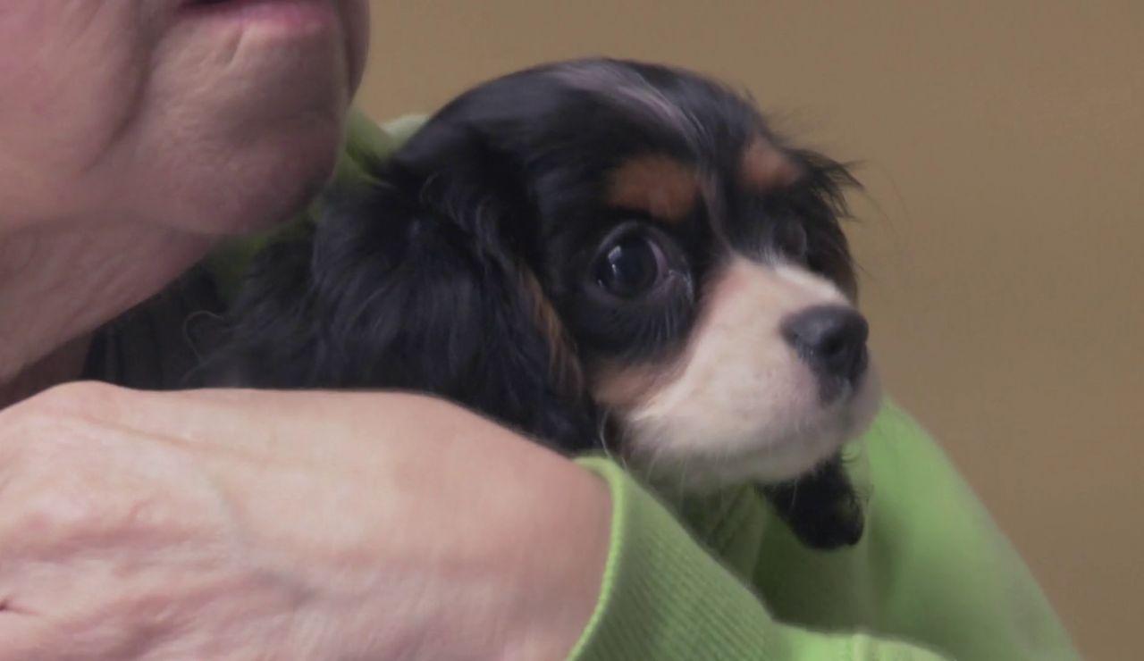 """Dr. Pol: """"La mayoría de cachorros de criaderos hay que tratarlos por coccidios"""""""
