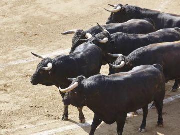 Seguro que no sabias estas cosas sobre los toros y las vacas