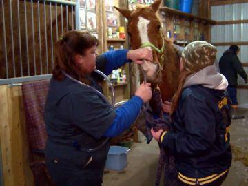 Si un caballo tiene las patas hacia arriba es muy mala señal. Te contamos la razón