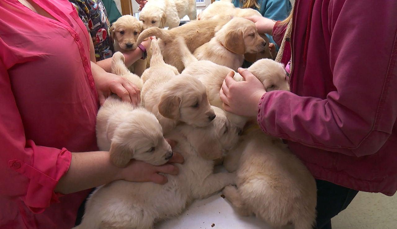 La consulta del Dr. Pol se llena de cachorros
